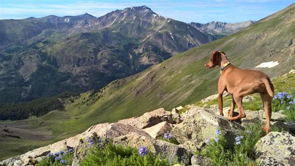 My dog, Luna, hiking in the mountains.